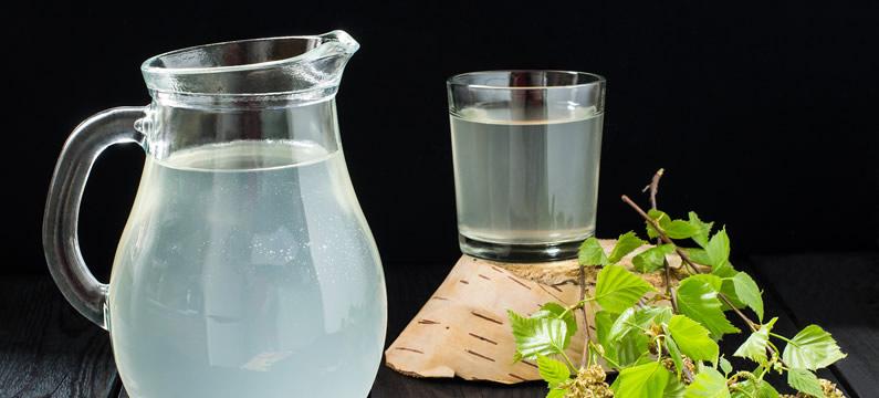 Właściwości soku z brzozy – cenna oskoła